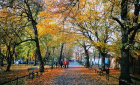 25 tysięcy drzew dla Krakowa. <br>W podziękowaniu za Nobla