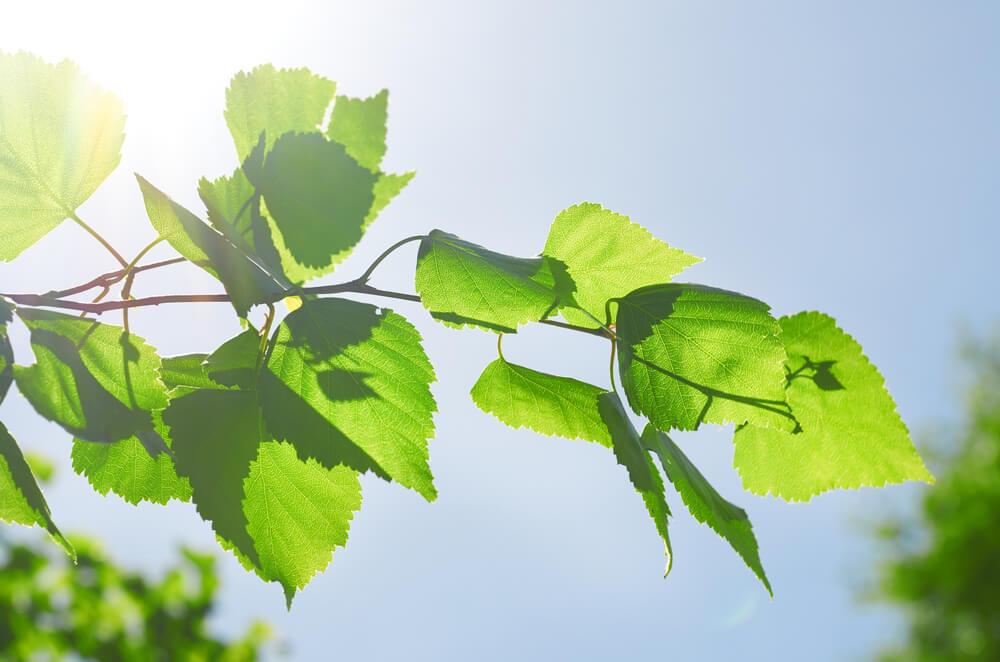 Eksperci przebadali warianty poprawy jakości powietrza w Małopolsce. Mamy 1452 zgony mniej każdego roku