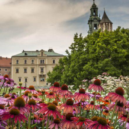 Ponad 25 000 nowych roślin w Krakowie dzięki dofinansowaniu z WFOŚiGW