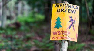 Od przykrego obowiązku po samowolkę, czyli wycinki drzew w Krakowie