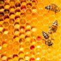 W jaki sposób Kraków dba o pszczoły?
