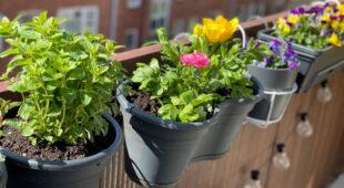 Kwiatowe balkony – z jakich roślin stworzyć azyl dla pszczół?