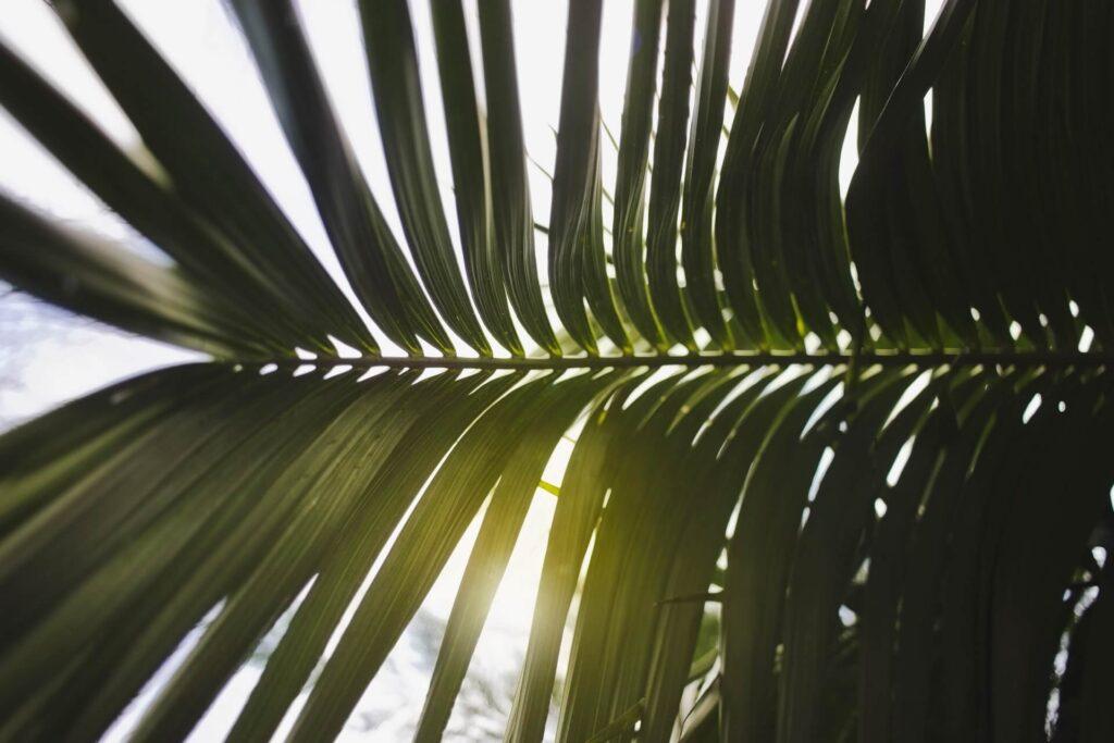 światło słoneczne przebijające się przez liście.