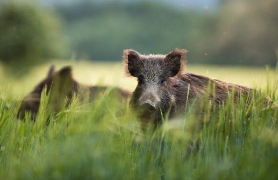 Jaki wpływ na zmiany klimatyczne mają zwierzęta?