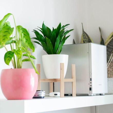Rośliny oczyszczające powietrze – idealne w domu i biurze
