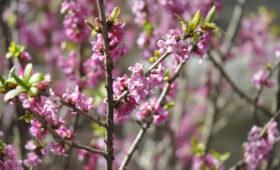 Trujące rośliny – kilka słów o gatunkach niebezpiecznych dla ludzi i zwierząt