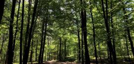 Czy krakowianie potrzebują rewitalizacji lasów?